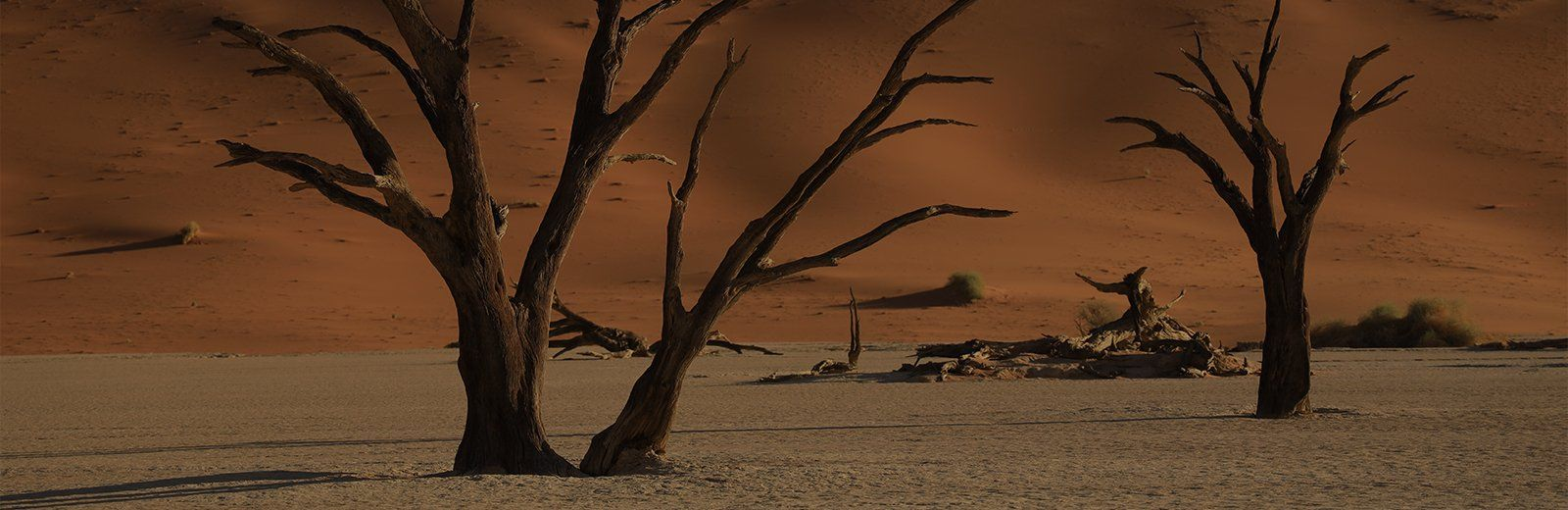 Beautiful image of trees on sand dunes at sunset taken on Canon EOS-R